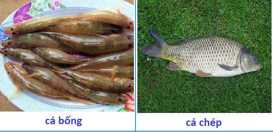 Máy tách được đa dạng các loại cá có kích thước khác nhau