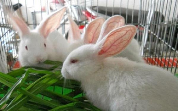 thiết bị chăn nuôi dê, thỏ