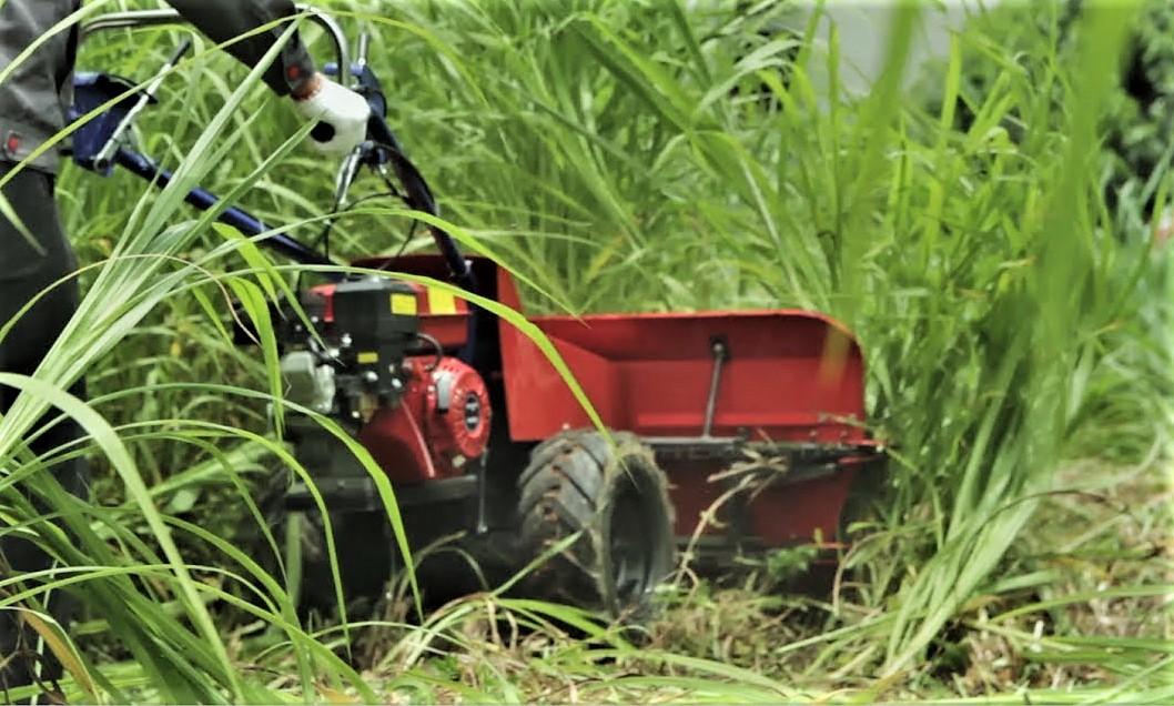 thu hoạch cỏ bằng máy